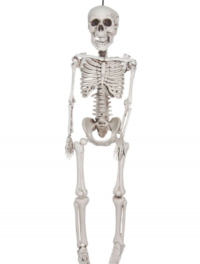 12 Inch Plastic Realistic Skeleton, halloween costume (12 Inch Plastic Realistic Skeleton)