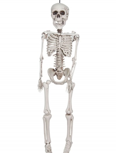 20 Inch Plastic Realistic Skeleton, halloween costume (20 Inch Plastic Realistic Skeleton)