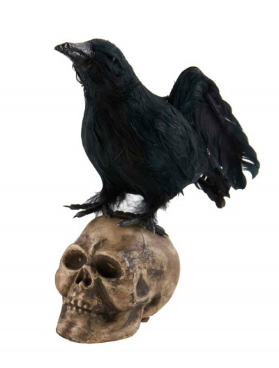 "6"" Crow Looking Up on Skull, halloween costume (6"" Crow Looking Up on Skull)"