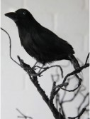 "8.5"" Glittered Crow, halloween costume (8.5"" Glittered Crow)"