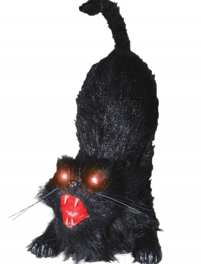 Animated Cat, halloween costume (Animated Cat)