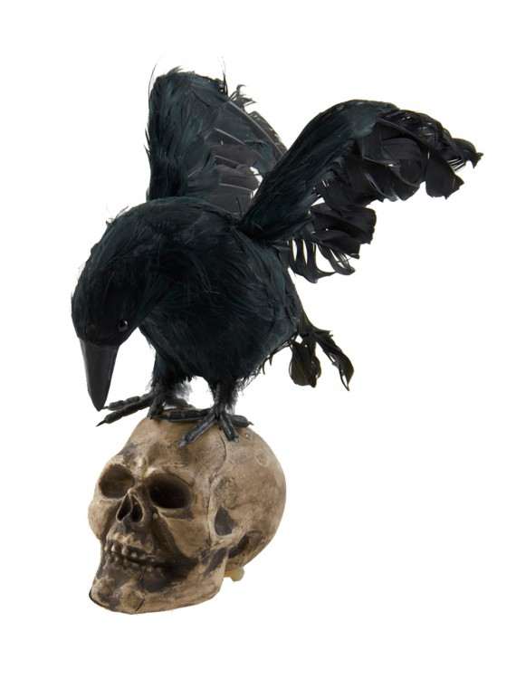 Crow Looking Down on Skull Decoration, halloween costume (Crow Looking Down on Skull Decoration)