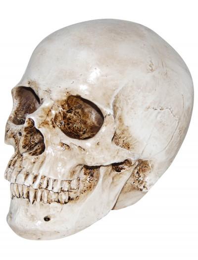 Deluxe Realistic Skull, halloween costume (Deluxe Realistic Skull)