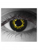 Gothika Black Wolf Contact Lenses, halloween costume (Gothika Black Wolf Contact Lenses)