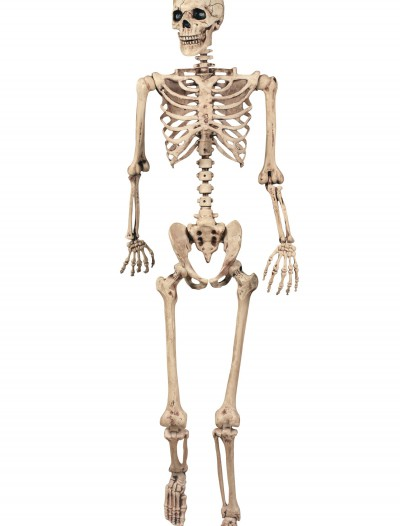 Lifesize Poseable Skeleton, halloween costume (Lifesize Poseable Skeleton)