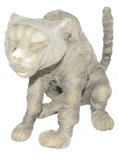 Mummy Cat, halloween costume (Mummy Cat)