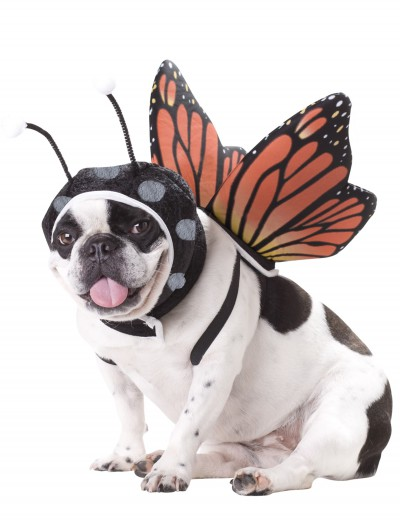 Pet Butterfly Costume, halloween costume (Pet Butterfly Costume)