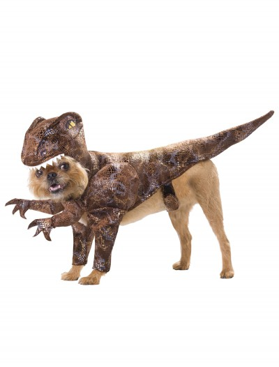 Pet Raptor Costume, halloween costume (Pet Raptor Costume)