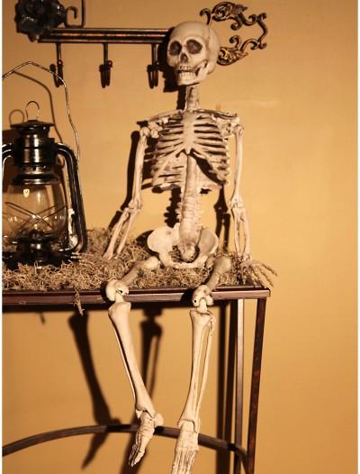 Plastic Realistic Skeleton, halloween costume (Plastic Realistic Skeleton)