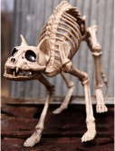 Skeleton Cat, halloween costume (Skeleton Cat)