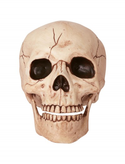 Skull with Movable Jaw, halloween costume (Skull with Movable Jaw)