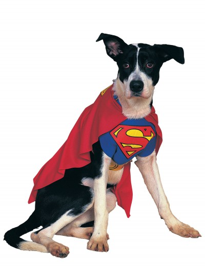 Superman Dog Costume, halloween costume (Superman Dog Costume)