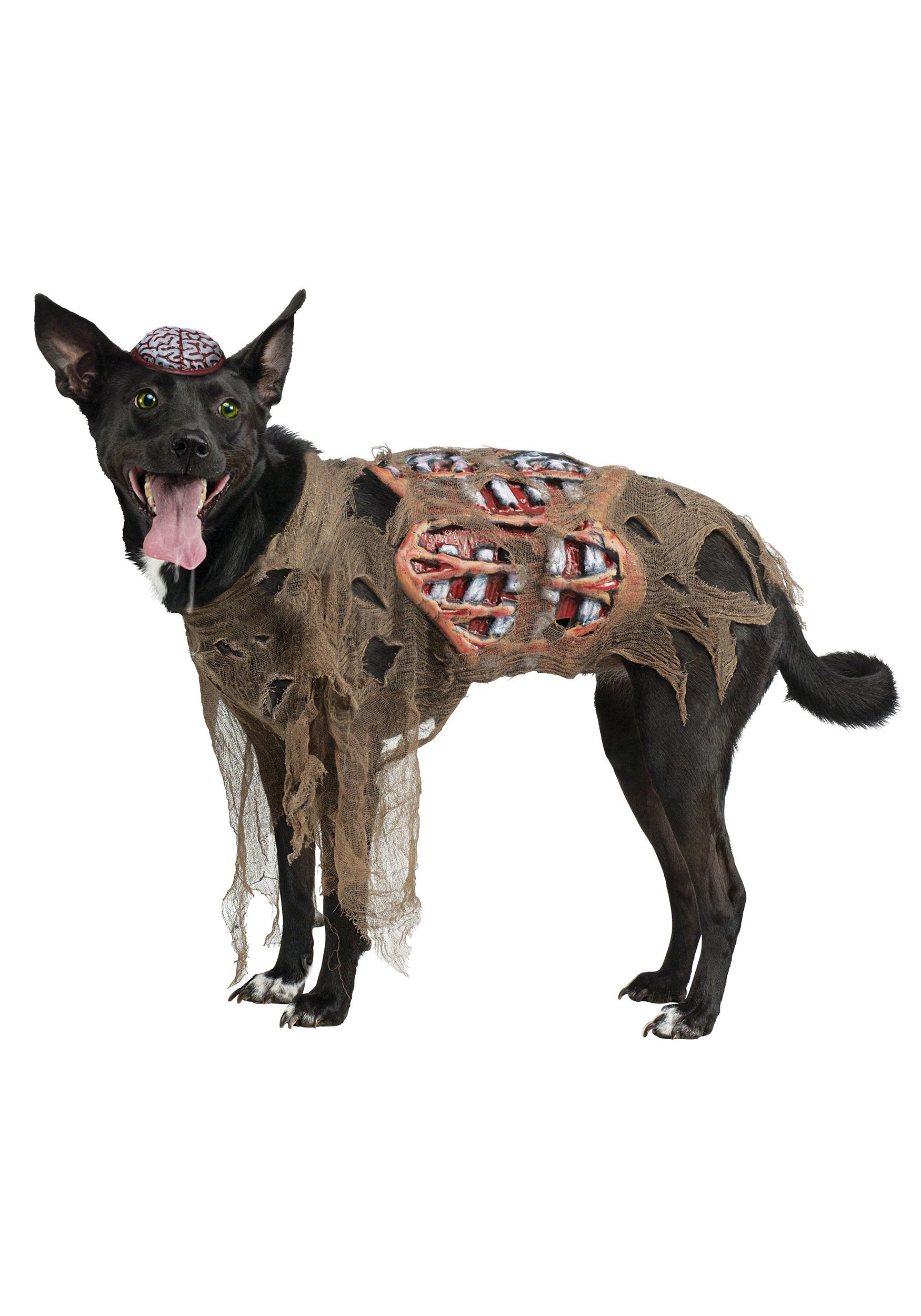Zombie Dog Costume  sc 1 st  Halloween Costumes & Zombie Dog Costume - Halloween Costumes